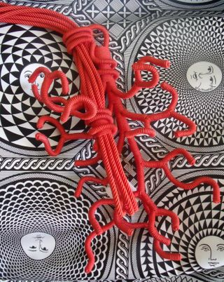 Coral declercq and fornasetti
