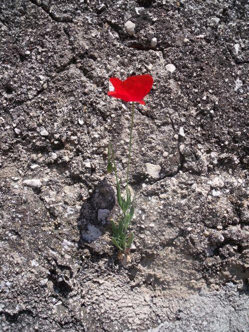 Poppy into a wild world