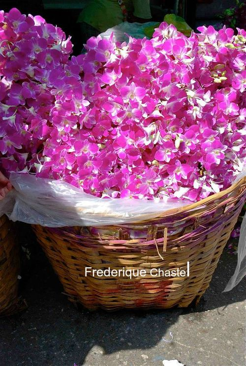 Pink orchids in flowers market bangkok