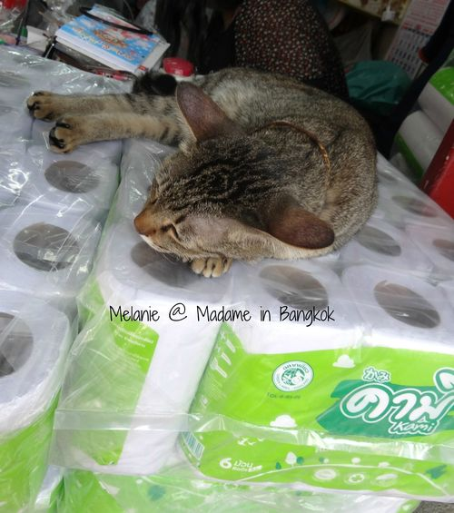 Sleeping cat in Chinatown