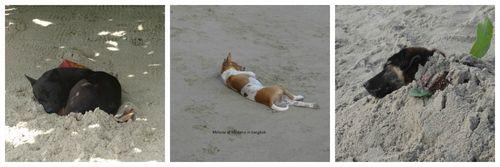 Vie de chien a Koh Chang Collage