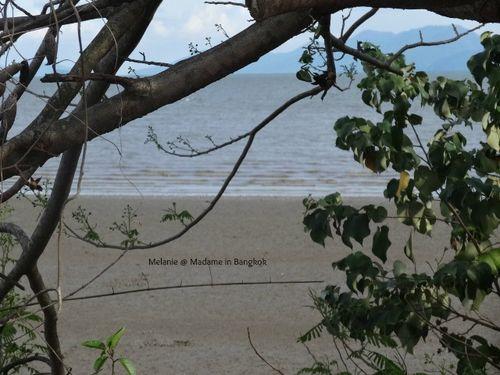 Mangrove sur la route de Koh chang
