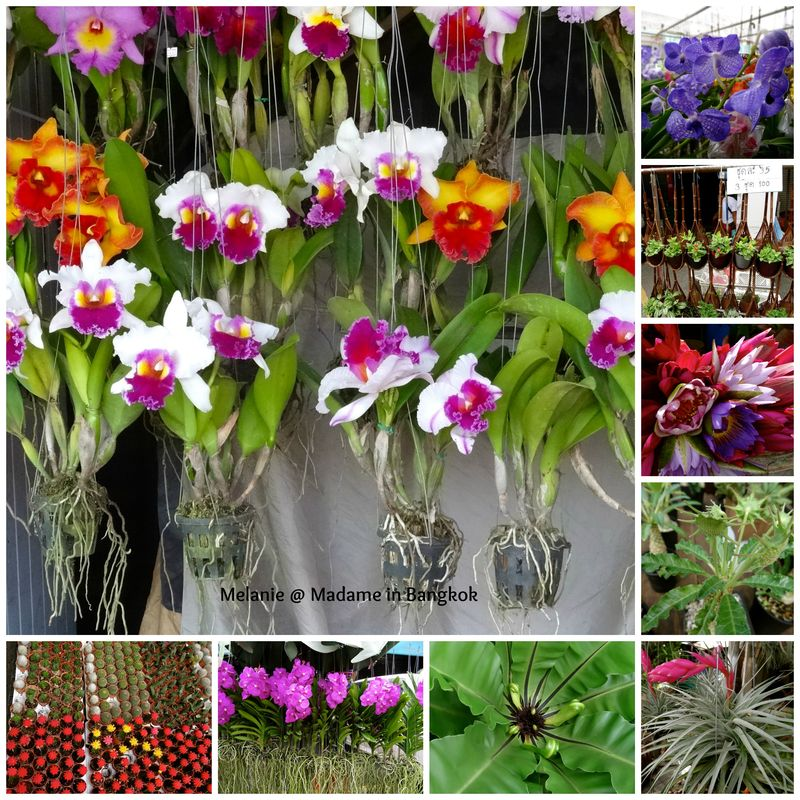 Chatuchak flowers market Collage
